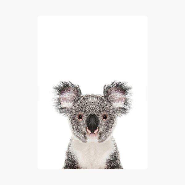 Retrato de oso koala Lámina fotográfica