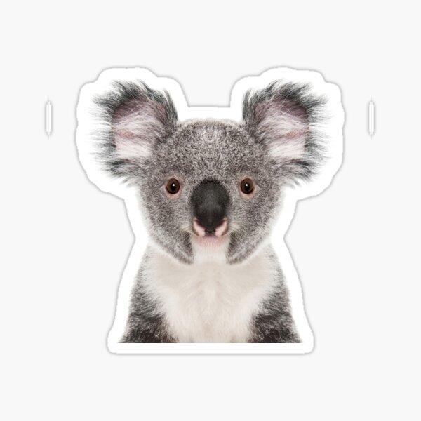 Retrato de oso koala Pegatina