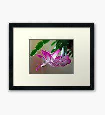 Christmas Cactus Framed Print