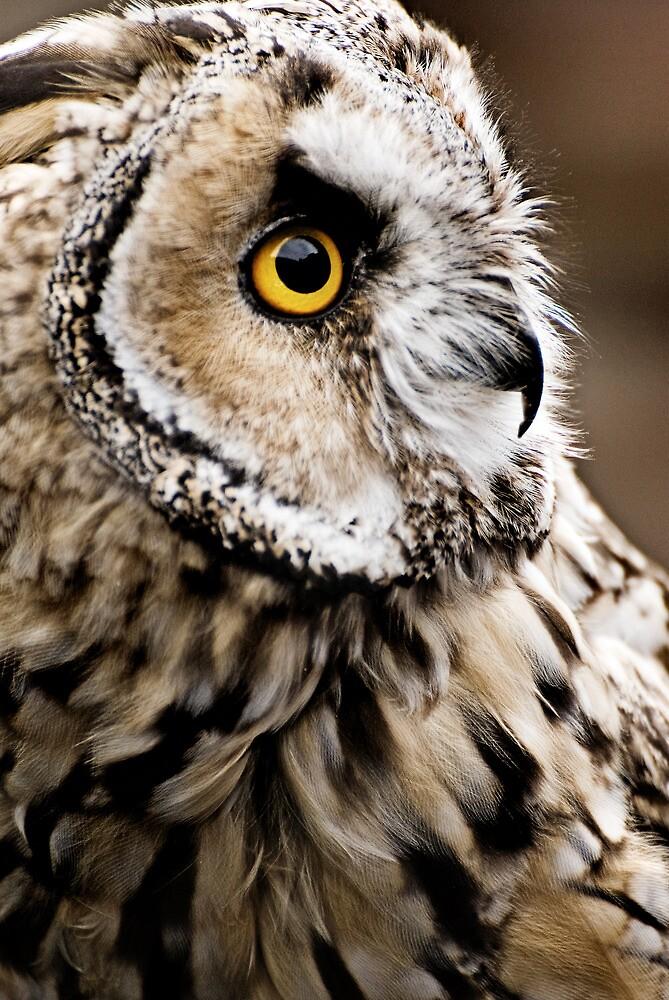 Muncaster-Long Eared Owl by Jay Payne