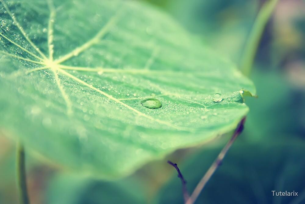 Dew on a leaf by Tutelarix
