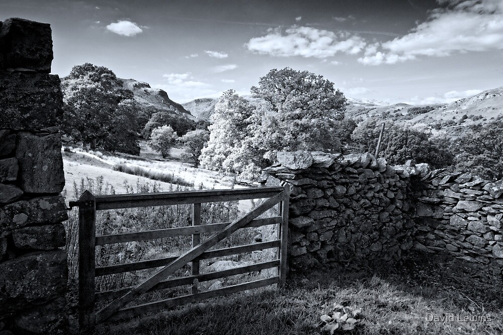Martindale Pseudo Infrared by David Lewins