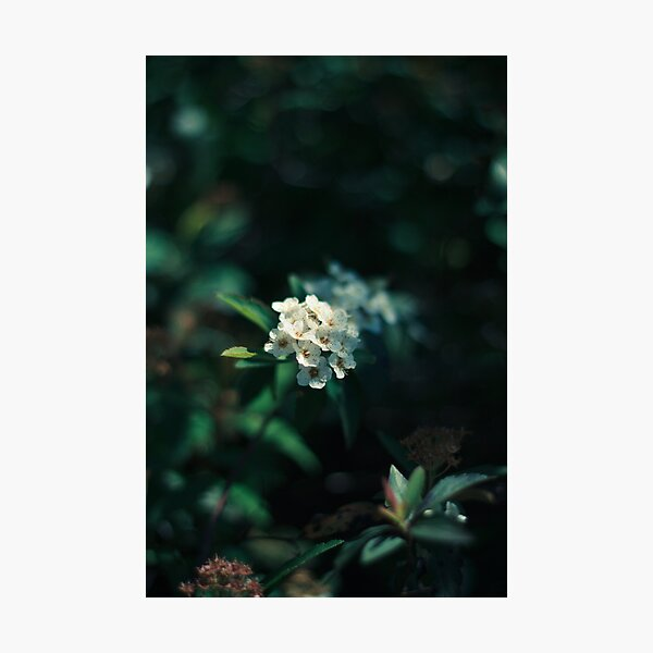 small, quiet, lit from within Photographic Print