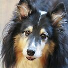 Canadian Collie Beauty  by Heather Friedman