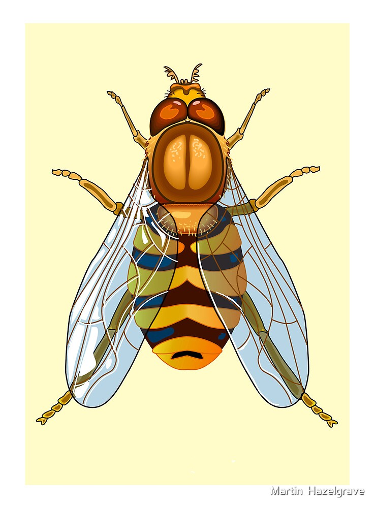 Illustrations hoverfly by Martin  Hazelgrave