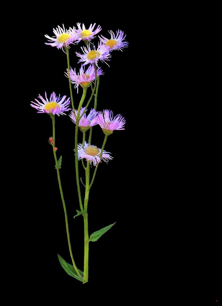 Wild flowers..... by DaveHrusecky