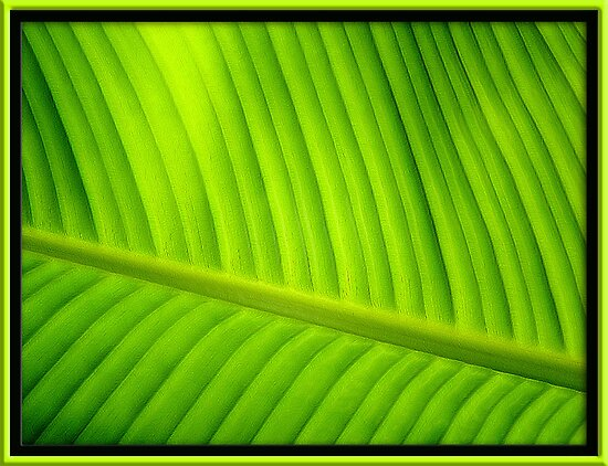 Tropical Green by glink