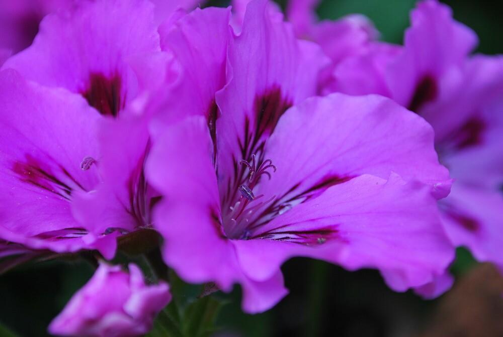 Purple splurge by goldnbee