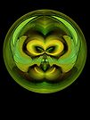 Night Owl by owlspook