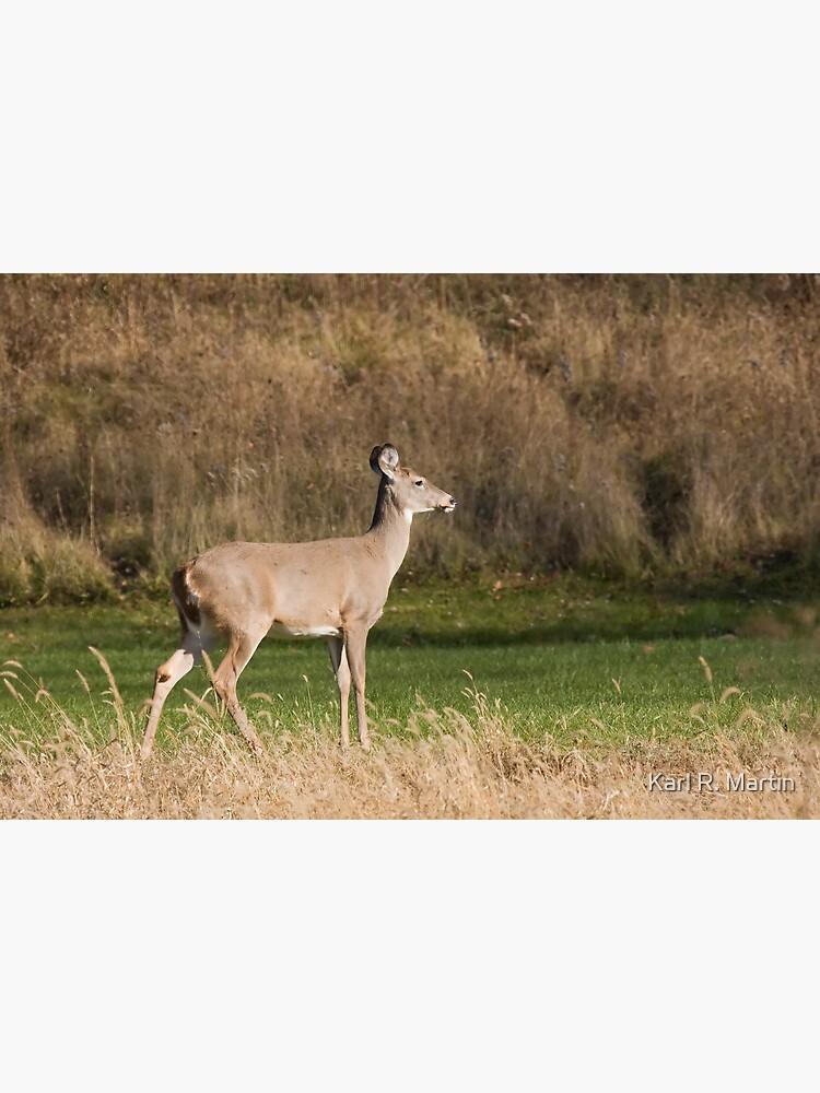 Female Deer by SirEagle
