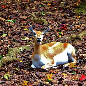 Gazelle Enjoying Autumn by Cynthia48