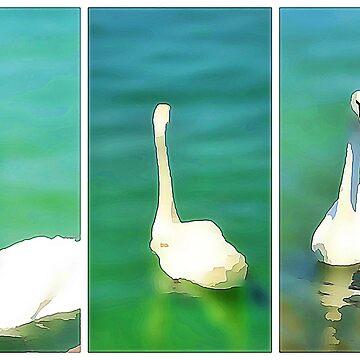 Swans at Lake Balaton - triptych  by almawad