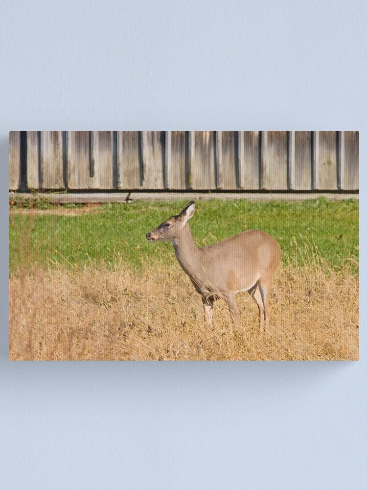 Alternate view of Female Deer Canvas Print