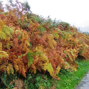 Autumn Bracken by lezvee