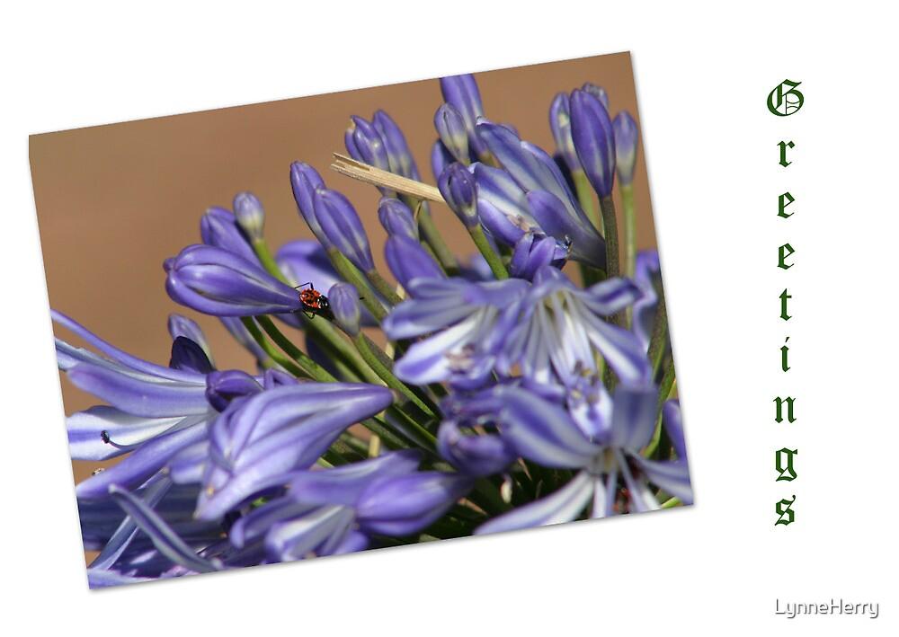 Agapanthus Card by LynneHerry