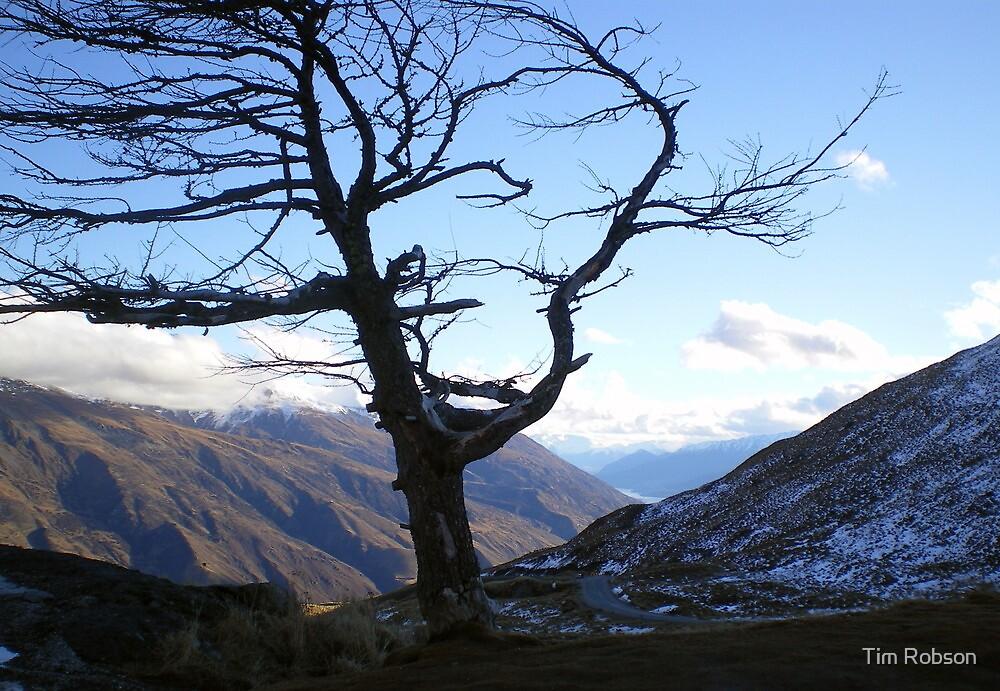 Arthurs Pass Tree, Cadrona NZ by Tim Robson