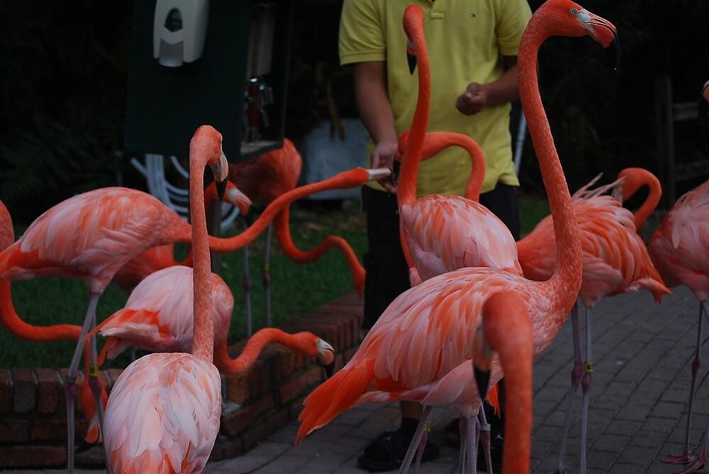 Flamingo Frenzie by Aavirett