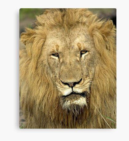 Close Up Lion Canvas Print