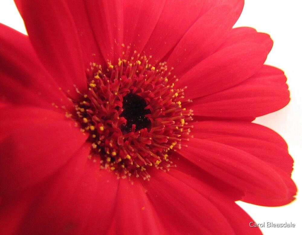 Red by Carol Bleasdale