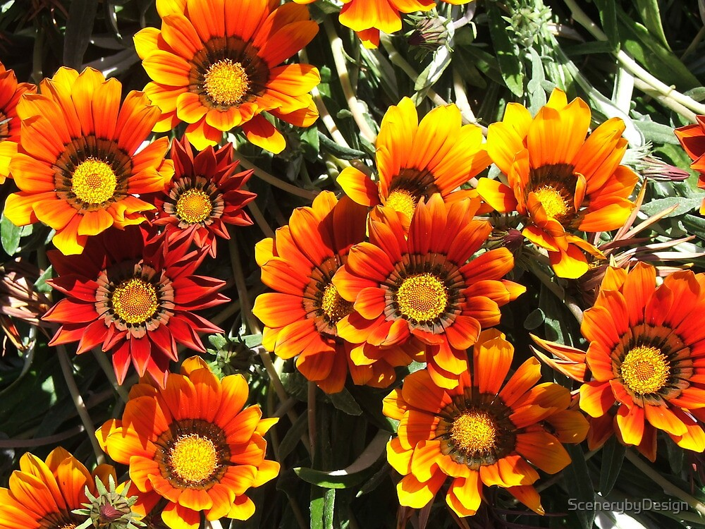 Daisies (3078) by ScenerybyDesign