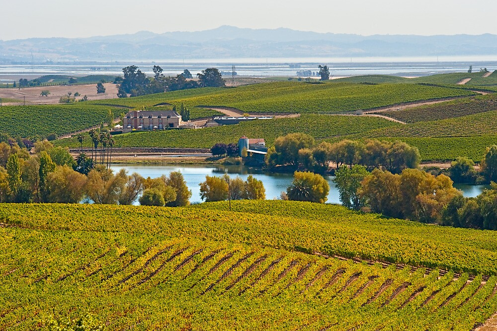 Wine Country Vista, Sonoma County, California by Cathy P. Austin