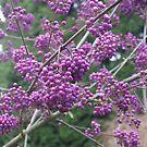Fabulous Purple Berries! by Pat Yager