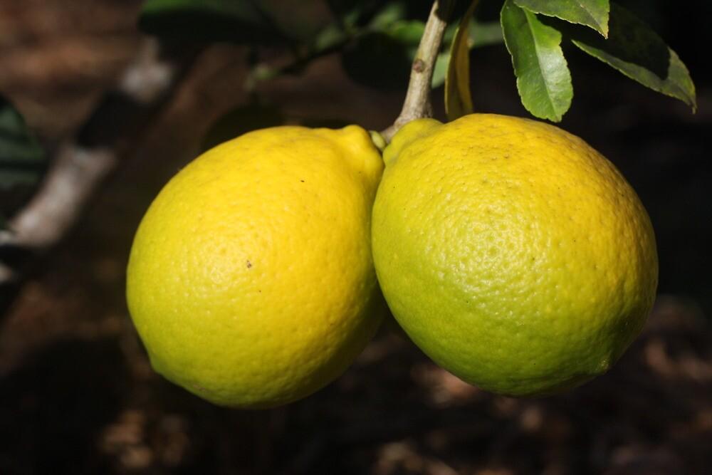 lemons1 by marine-lea