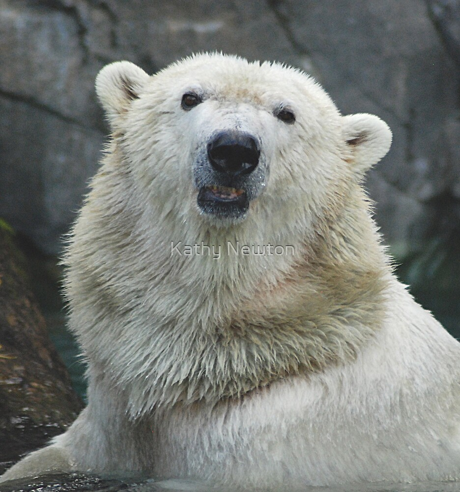 Polar Bear Hello by Kathy Newton