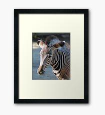Zebra baby Gerahmtes Wandbild