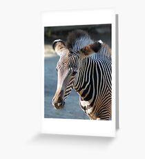 Zebra baby Grußkarte
