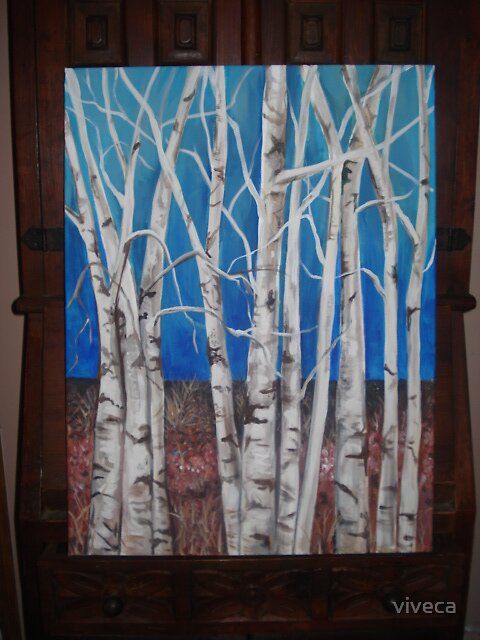 Simple Beauty of Birches by viveca