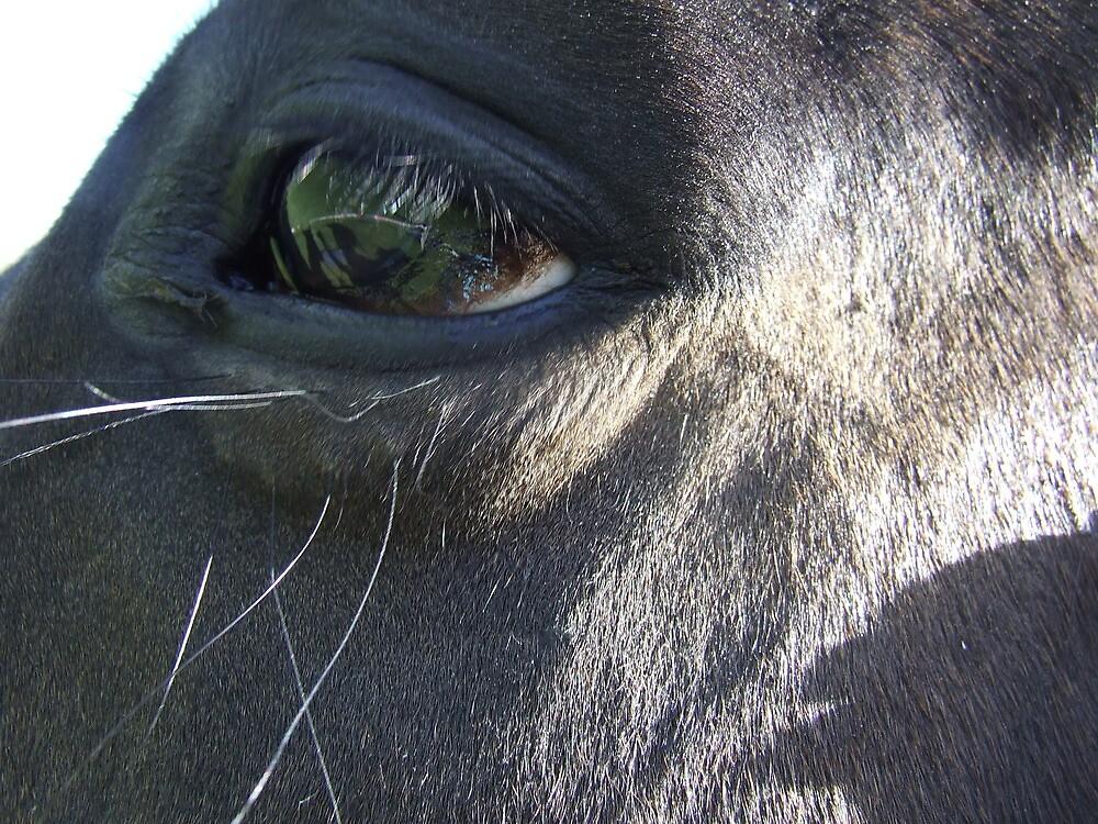 Jelly's eye by Edwina Hare