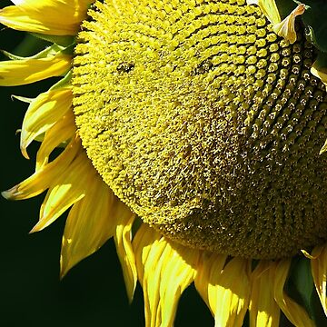 The Sunny Smile by Doty