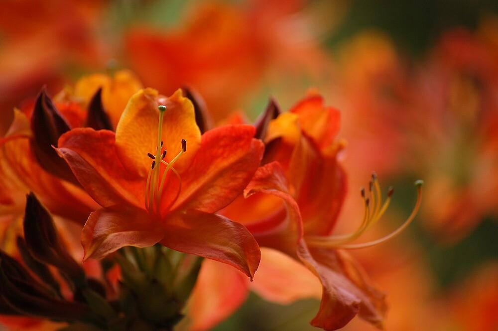 I owe perhaps becoming a painter to flowers.  - Claude Monet by Bernard (Ben)  Bosmans