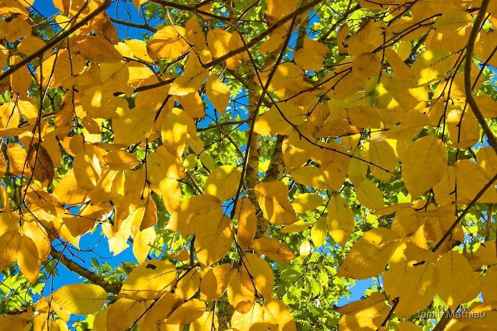 Yellow Leaves in the Sun by Jamie Mathiau