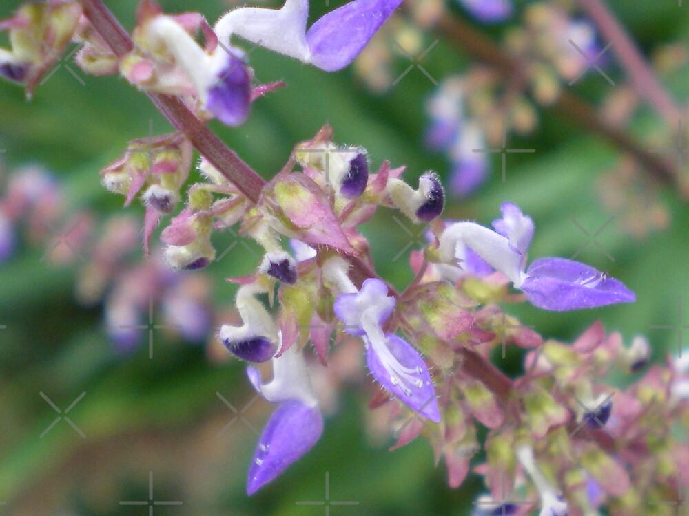 Purple Teardrops by Rebekah  McLeod