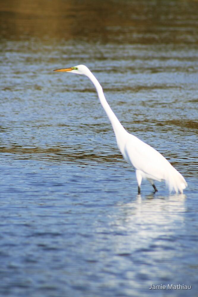 Egret at Myakka State Park, Florida by Jamie Mathiau
