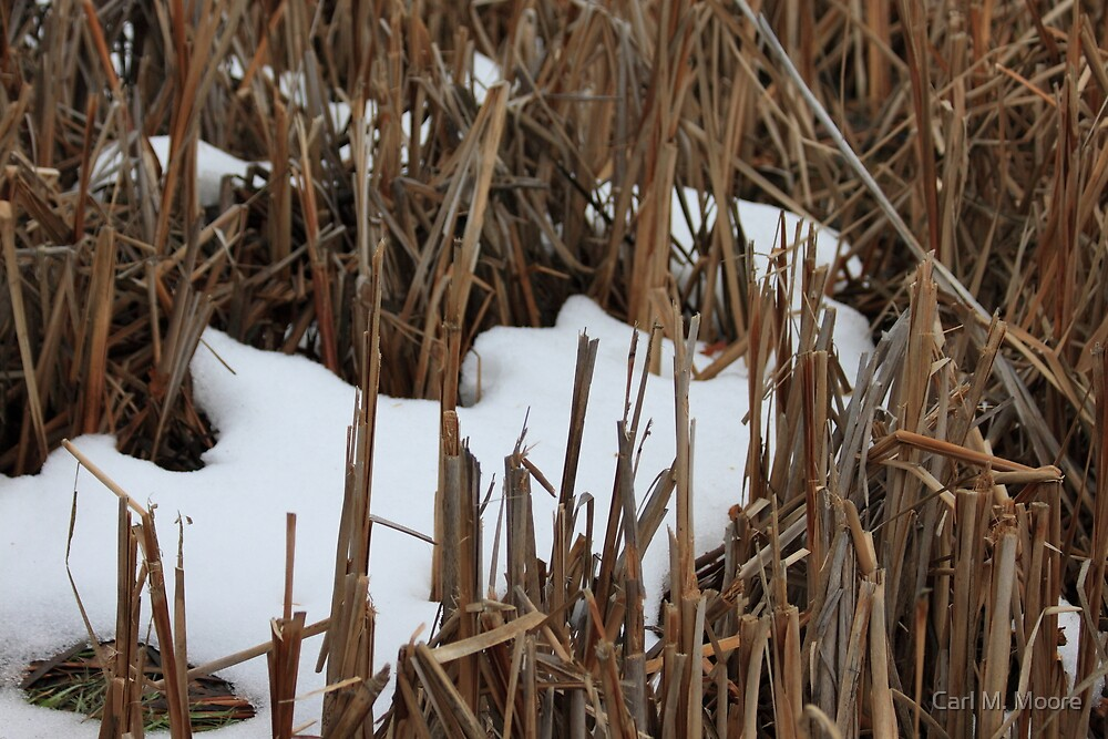 Snow Abstract by Carl M. Moore