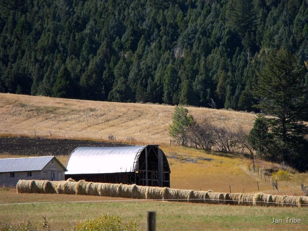 Idaho Farm by Jan  Tribe