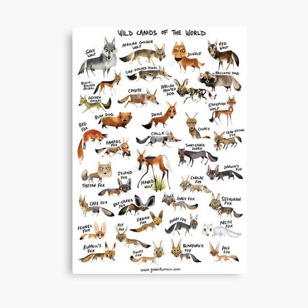 Wild Canids of the World Canvas Print