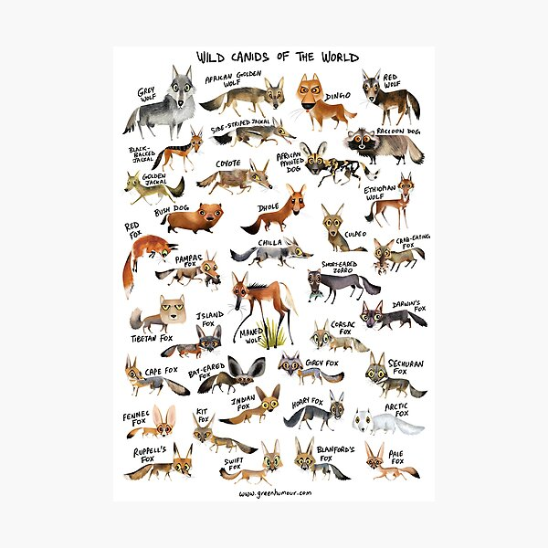 Wild Canids of the World Photographic Print