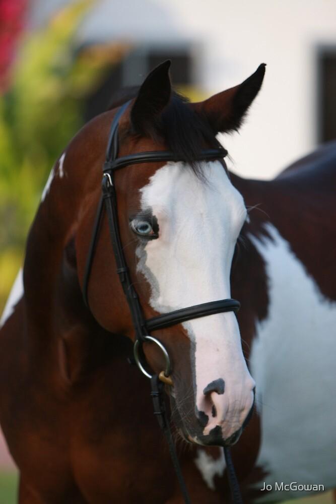 Magnificent Horse Portrait by Jo McGowan