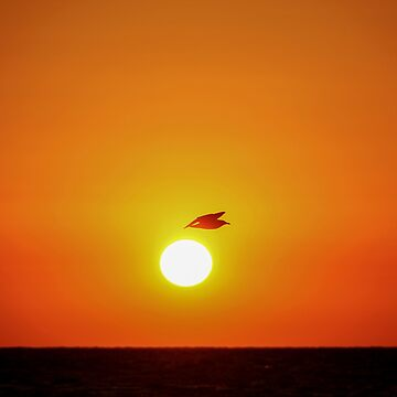 silhouette of a seagull at sunset. flying past the sun by PhotoStock-Isra