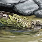 Bathing Kea by Flynnthecat