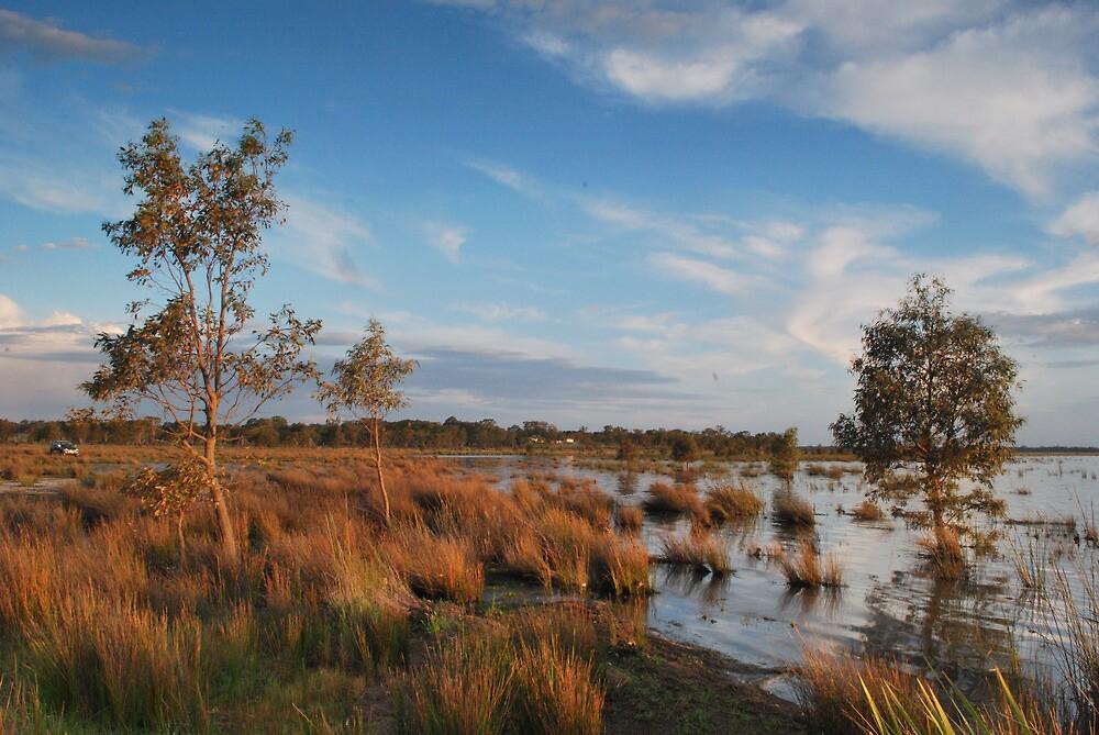 Lake Londsdale Grasses by DanielTMiller