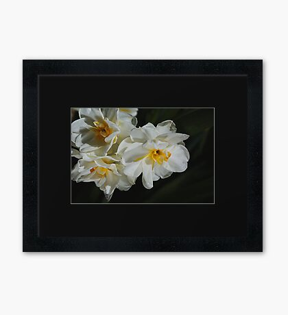 A Bunch Of Spring, Daffodils Framed Print