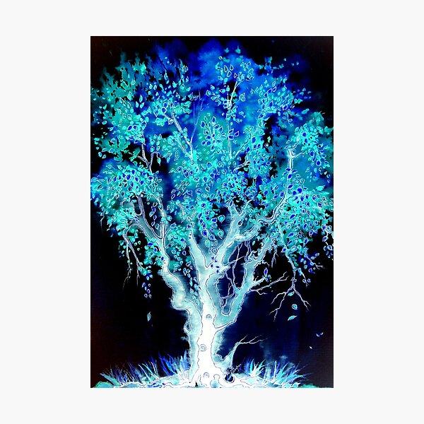 Tree Shine Photographic Print