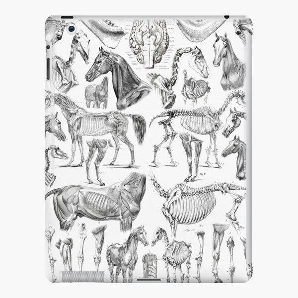 Horse Anatomy (black on white) iPad Snap Case