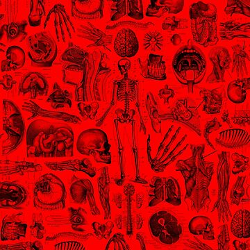 Red Human Anatomy Print by adamcampen