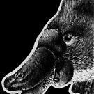 Platypus  by NoelleMBrooks